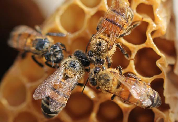 entretien-ruches-abeilles