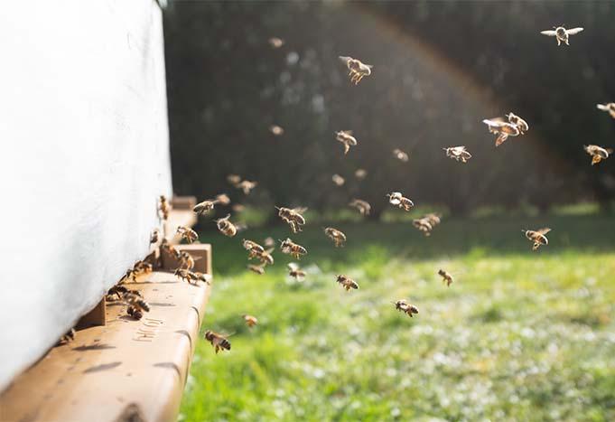 installation-ruches-paysagiste